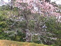 2008,2,4~7okinawa 038.jpg