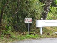 2008,2,4~7okinawa 043.jpg